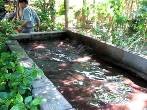 New 1000 gallon tilapia 39 grow out 39 tank youtube for Koi pond hydroponics