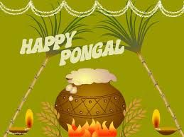 best holy cow toni meneguzzo images cows hindus image result for pongal festival