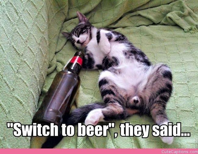 cat beer bottle animal - photo #38