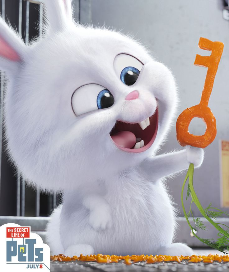 Snowball the rabbit tries DIY with this carrot key.   The Secret Life of Pets   In Theaters July 8