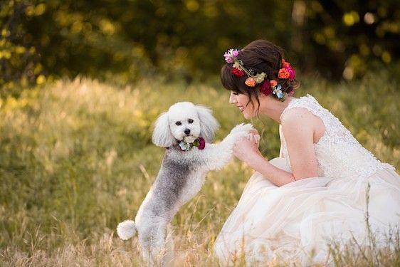 Доброе утро by @jessicayatesphoto #Милота #bridemagru #утроневесты #невеста #цветы #венок  #собака #пес #пудель #bride #сдоброымутром #wedding #morning #goodmorning #beautiful #wedding #bridemagru #romance #marriage #weddingday #flowers #instawed #sunny #bridalmorning  #wreath #dog #poodle #dogs