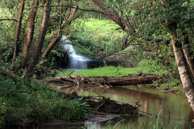 Picnic With kids at Brookwood Estate Trout Farm, Cradle of Humankind