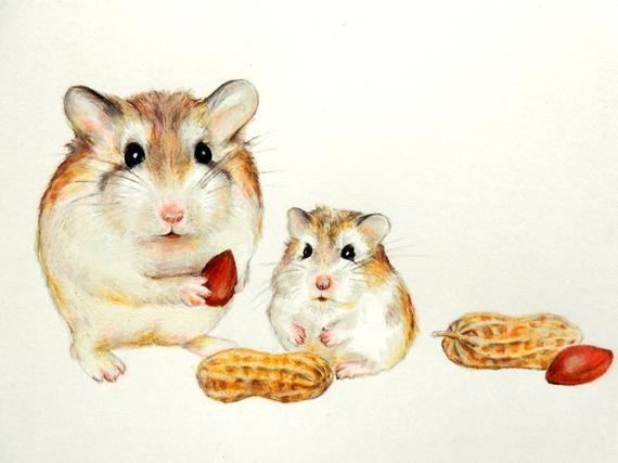 Ahnliche Artikel Wie Originale Hamster Robo Hamster Malerei Susse