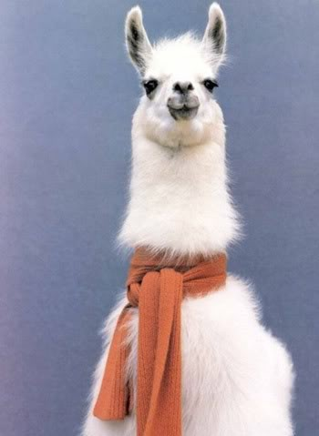 "For some reason, when I look at llamas, I'm always waiting for them to say, ""Whaasup!"""