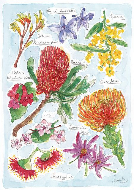 Dawn Tan's native Australian flowers