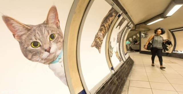 UPDATE – Every Advert in a London Underground Station Is Replaced With Cat Photos