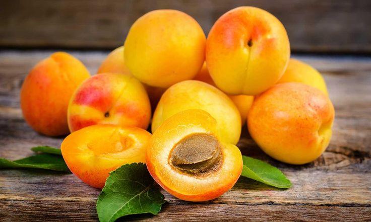SOUND: http://www.ruspeach.com/en/news/10861/     Вторая половина июня - это время абрикосов. Интересно то, что абрикос - это плодовое дерево рода слив. Абрикос - это очень вкусный и витаминный плод. Его употребляют свежим или в виде сухофруктов (курага). Абрикосы используются для пригот
