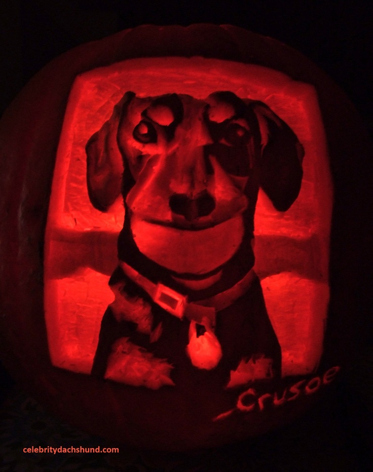 The Crusoe Dachshund Pumpkin Carving! Read my new post: http://www.celebritydachshund.com/2012/11/04/super-dogs-dachshund-halloween-costumes/