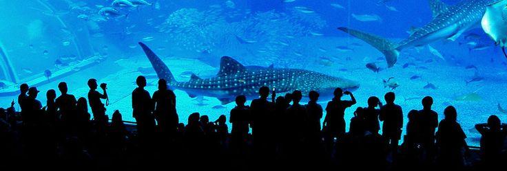L'Oceanogràfic, Valencia - Europe's largest single aquarium