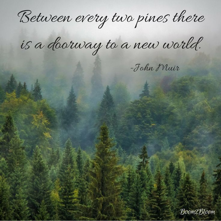 Between every two pines there is a doorway to a new world quote by John Muir. Nature Quotes. #Nature #NatureQuotes #NatureQuotesEbook