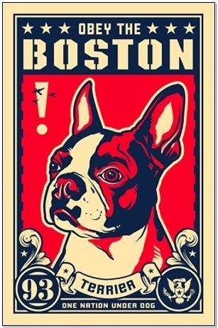 Obey Boston terriers