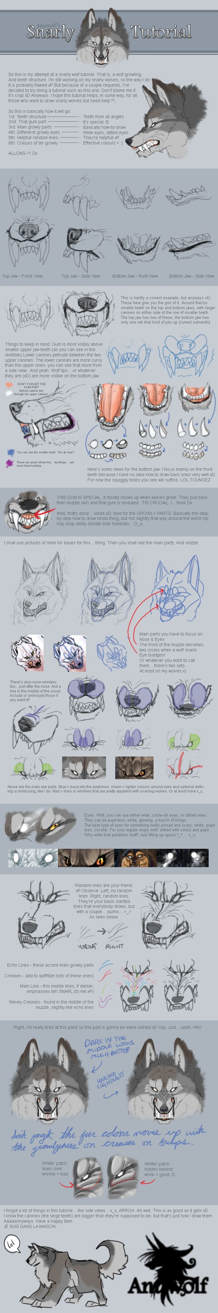 Snarling Wolf Tutorial  How To Draw A Wolf Showing His Teeth  Head Study   Drawing Reference