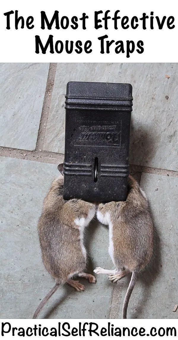 The Best Mousetraps Mouse Trap Diy Best Mouse Trap Mouse Traps
