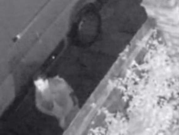 Met Police releases CCTV from Woodford Green burglary - Yellow Advertiser - Brentwood