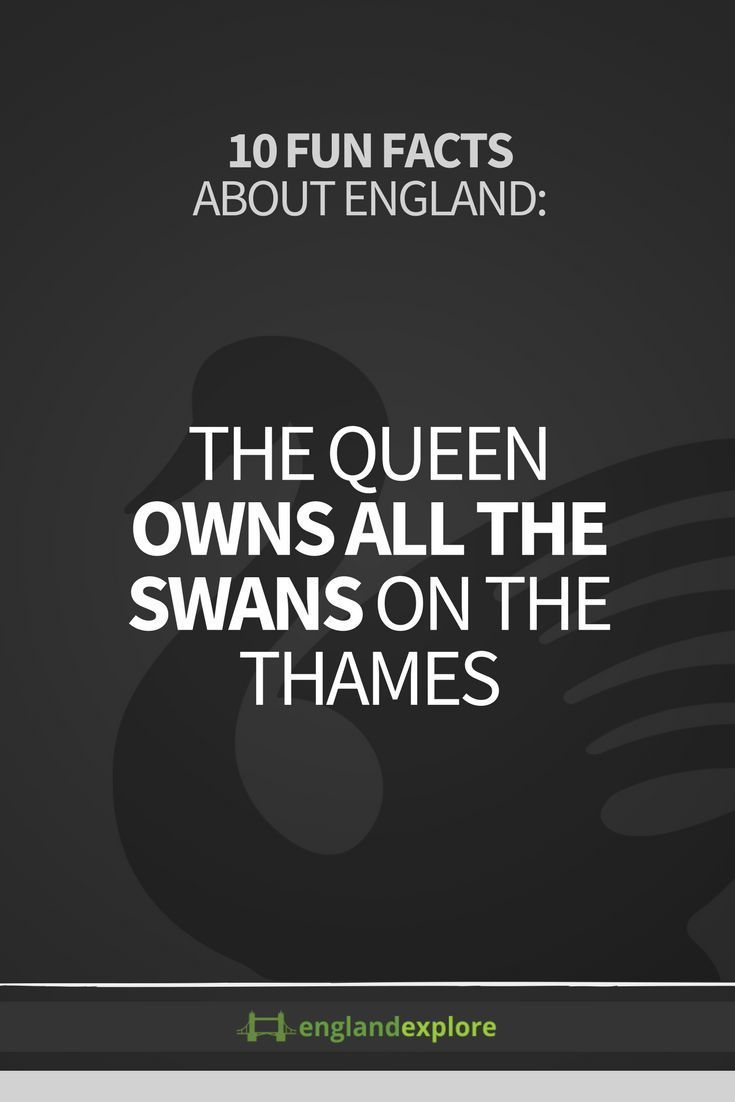 Counting the swans – or 'swan upping' – is done every year by the 'Keeper Of The Queen's Swans', an actual job.