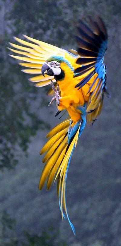 What a stunning looking Macaw