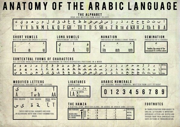 Anatomy of the Arabic language - Anatomy of the Arabic language - This is an excellent chart of Arabic letters in every aspect. But I don't understand the number part.