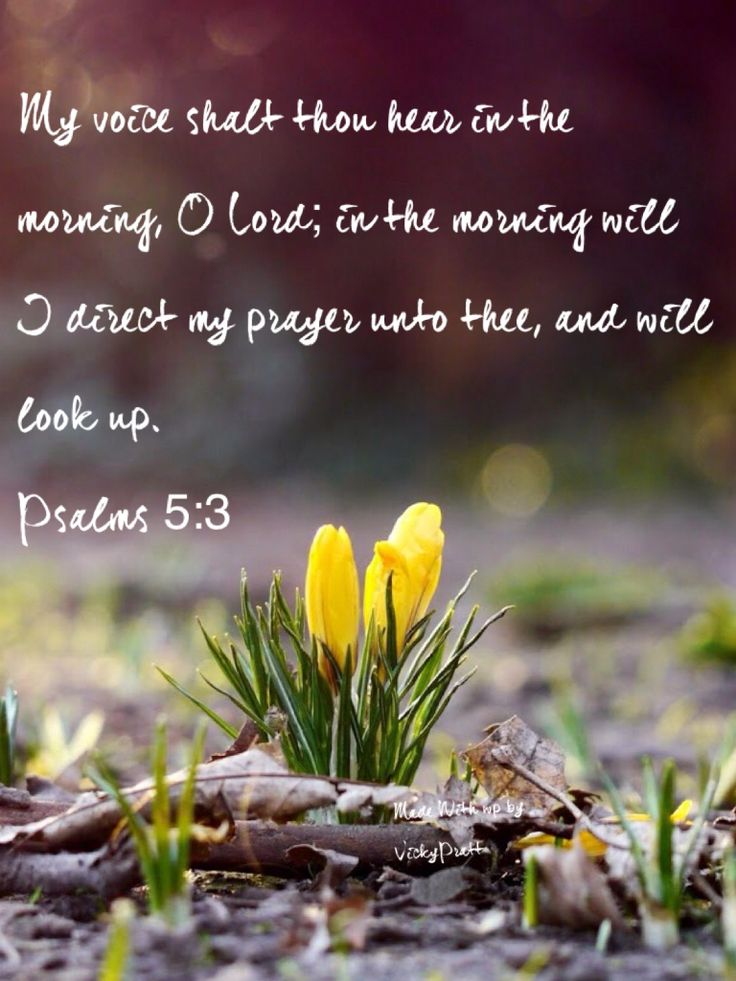 Psalms 5:3  Thank you Lord for your word this morning-hhs