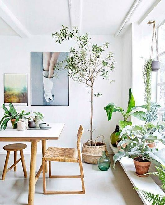 sumptuous design ideas green house plant identification. get your green jeans on  sfgirlbybay Living Room PlantsHouse 446 best i n d o r g a e images Pinterest Container