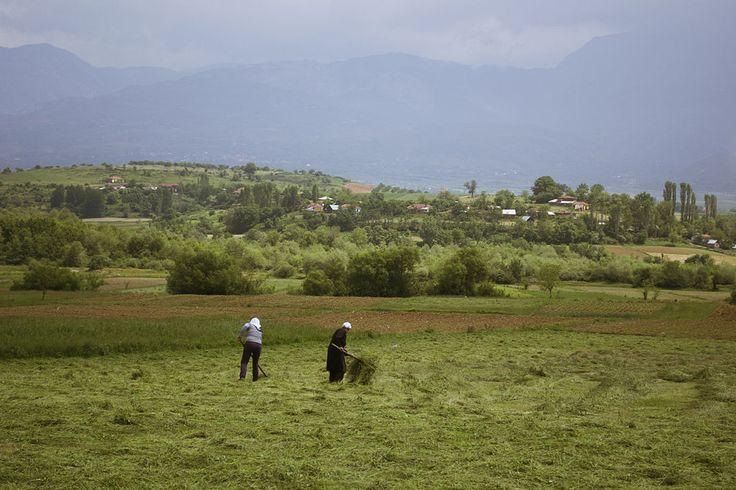 アルバニアの農家 : Albania outside of Peshkopi ◆アルバニア - Wikipedia https://ja.wikipedia.org/wiki/%E3%82%A2%E3%83%AB%E3%83%90%E3%83%8B%E3%82%A2 #Albania