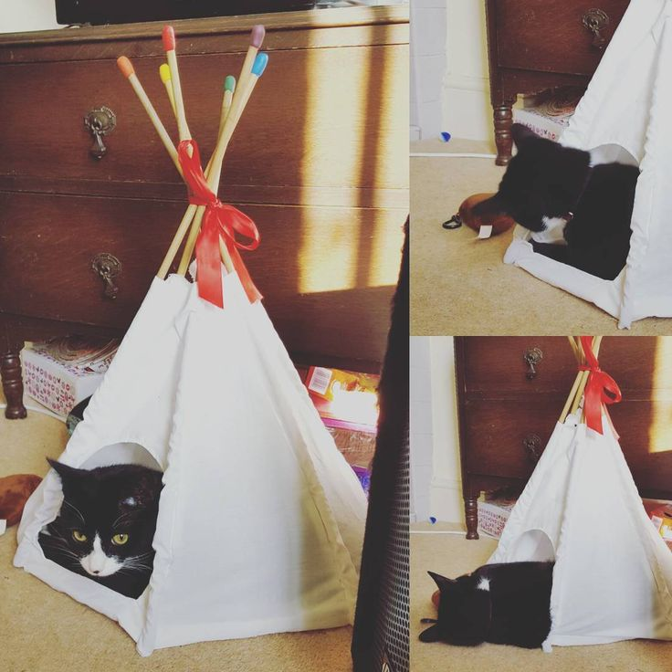 Her tipi is also a hit but it lacks structural integrity so collapses fairly often. I think I need to add some interfacing and maybe some more bamboo sticks in the base.   #catsofinstagram