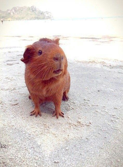 233 Best That's Mr. Pig Images On Pinterest