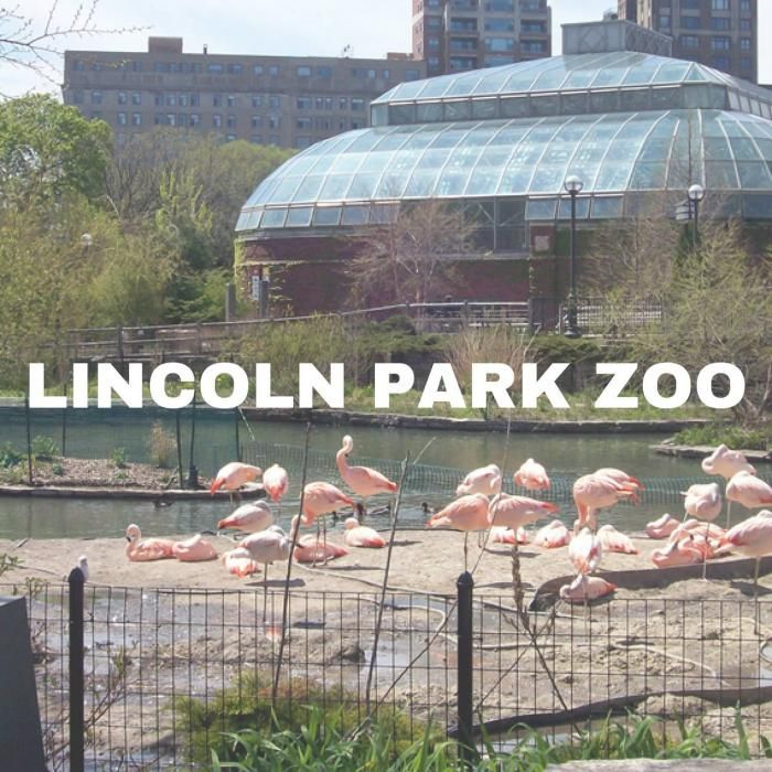 Lincoln Park Zoo Free Zoo In The Park Lincoln Park Zoo Chicago Attractions Lincoln Park