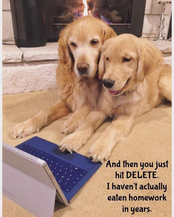 Technology has really taken over our lives.  Credits to photo owner ✅ Follow, like and comment ✏ @friendly_goldenretriever  Tag your love  Thank y…