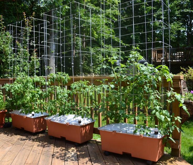 Earthbox tomatoes garden and forum gardening pinterest for Garten forum