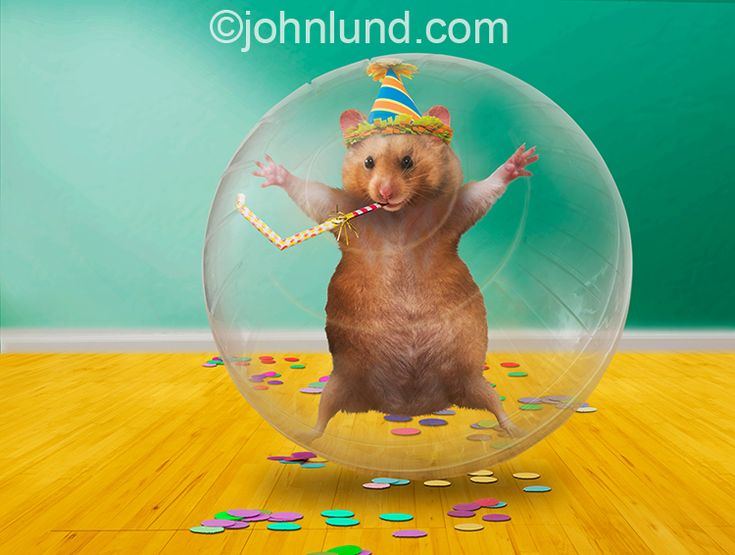 34 best funny animal photos for humorous greeting cards images on funny party hamster i created this image as a funny birthday card for marian heath m4hsunfo