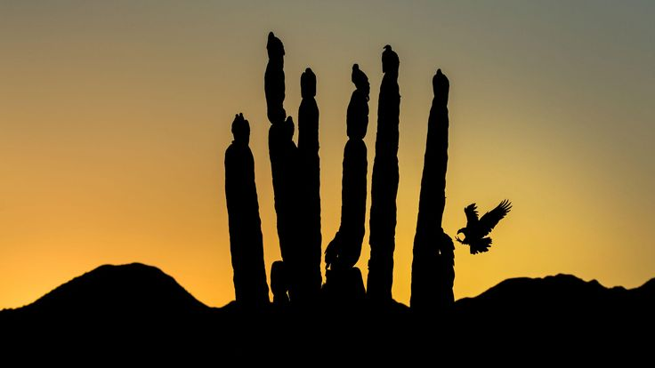 Audubon Photography Awards - Fine Art Honorable Mention #PetNook
