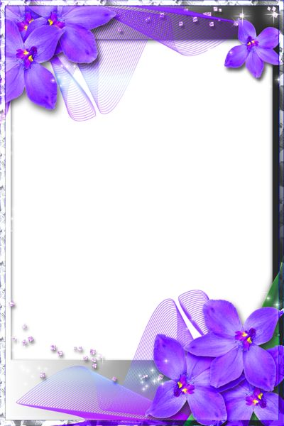Purple Heart Frames | Beautiful Transparent Frame with ...