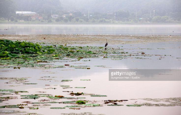 Dumulmeori, Gyunggido, South Korea (Photo by eyepurifier, Alex SM Han) #Dumulmeori #fog #foggy #riverside #dawn #landscape #water #river #Hangang #gettyimages #Bukhangang #southkorea #Korea #mornin…