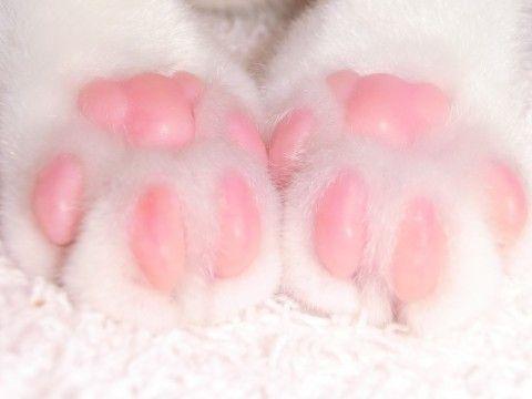 Aww♡ Kitty cat paws...looks like pink teddy bears♡