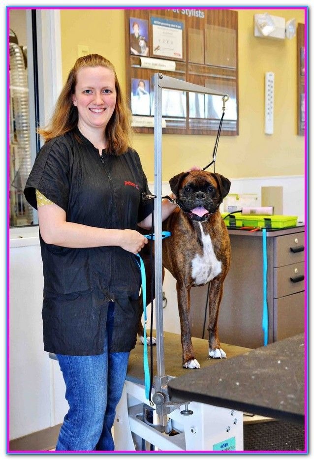 How Much Is Dog Grooming At Petco Dog Grooming Dog Grooming