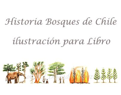 "Check out new work on my @Behance portfolio: ""Ilustración 'Historia Bosques de Chile'"" http://be.net/gallery/49151751/Ilustracion-Historia-Bosques-de-Chile"