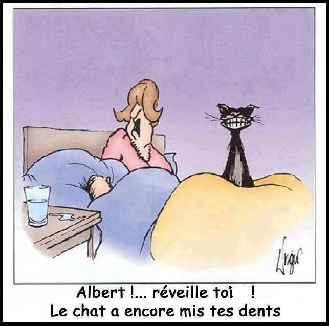 Image - WEEK-END.....UN PEU D'HUMOUR!!!! DE LA FRAICHEUR ET DE LA PLUIE. - Blog de le-tricot-de-marcelle - Skyrock.com