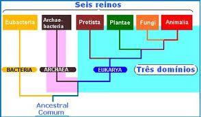 Resultado de imagen para clasificacion de las bacterias cuadro sinoptico