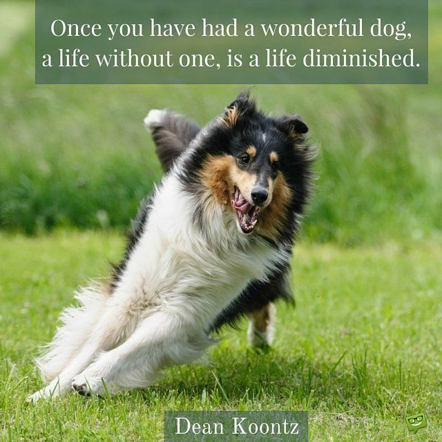 Best Chief Images On Pinterest Dog Poems Dogs And Dog Loss - 20 reasons why you should be thankful to have a dog