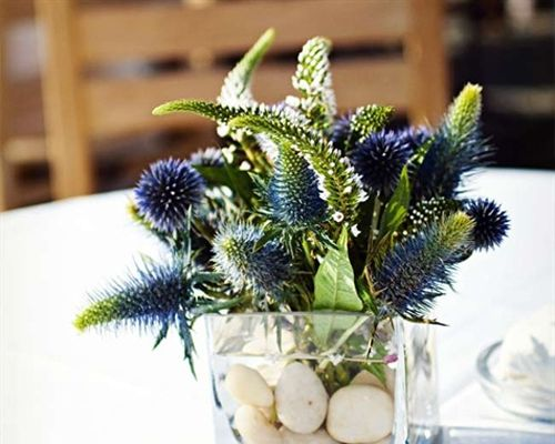 Blue Thistle Decor  Blue thistles filled small, square vases with submerged stones for earthy, laid-back decorations.
