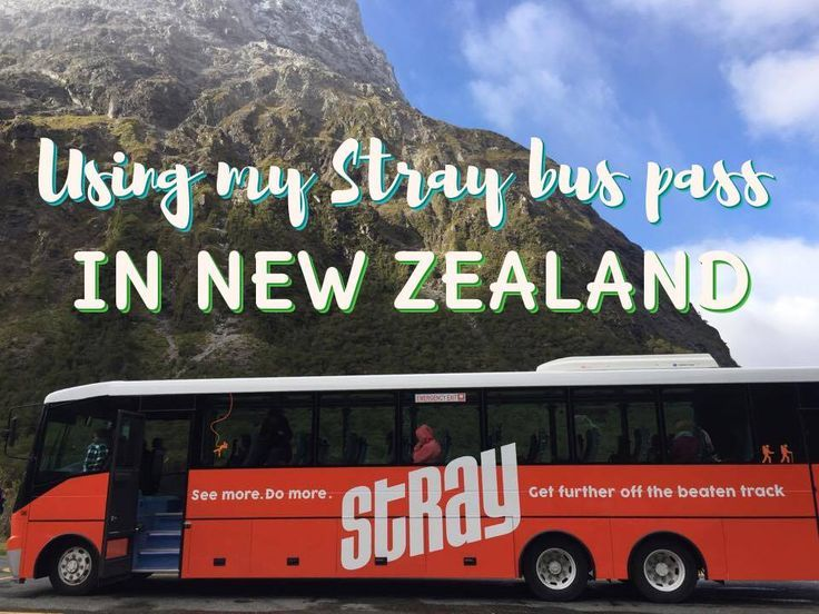 I recently traveled on a Stray bus pass in New Zealand and had the time of my life. Would I recommend Stray? Read more to find out!