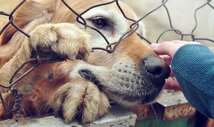 Prohiben Venta de Cachorros en Estados Unidos Para Fomentar las Adopciones.