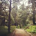 Bosque Los Colomos - Guadalajara, JAL