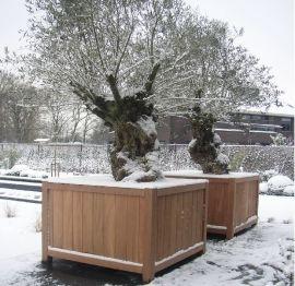 Grote hardhouten plantenbakken met prachtige oude olijven in de sneeuw. Leverbaar in verschillende modellen en maten in onze webshop http://www.hettuinleven.com/c-2129443/hardhout/