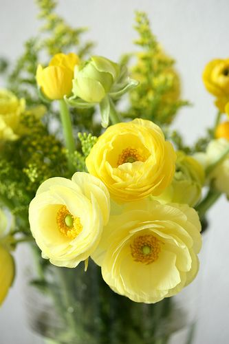 yellow ranunculus - this board features flowers that are usually available for florists to buy in the UK in February for a February wedding. Winter - Spring - Wedding - Florals - Flowers - Seasonal - UK - England - Bouquet - Buttonholes - Table - Arrangement