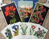 Vintage Swiss German flower ephemera postcards and other interesting postcards