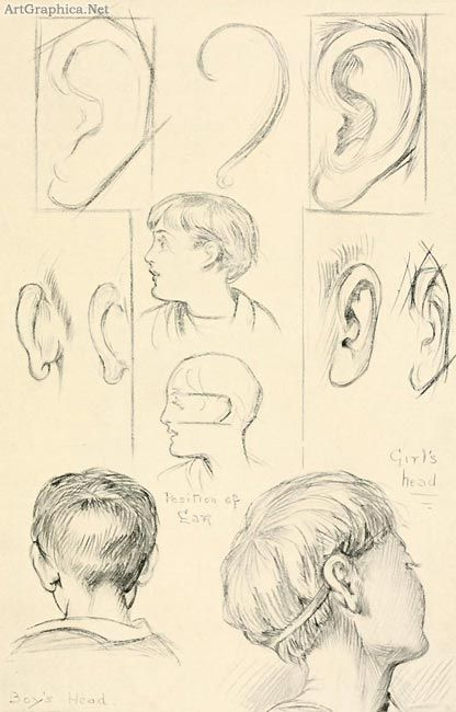 drawing ears, beginner guide to art
