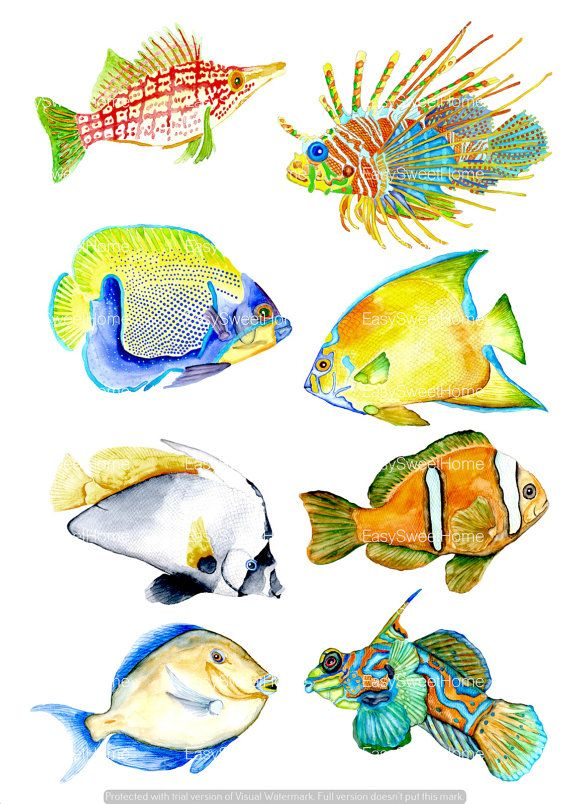 Watercolor Coral Reef Fish Bathroom Decals  by EasySweetHome