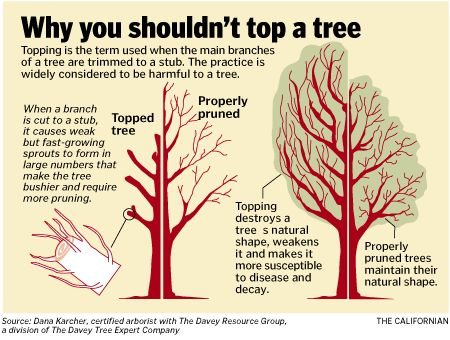 16 best Topping trees images on Pinterest Plant, Trees and Bloemen