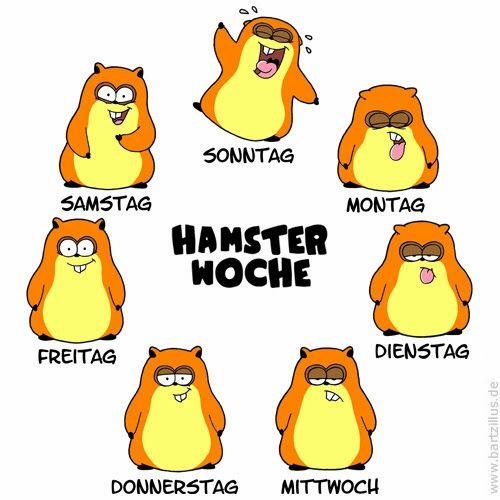 Poweryoga Hamster: Das Stimmungsbarometer sagt: Es ist FREITAG!!!